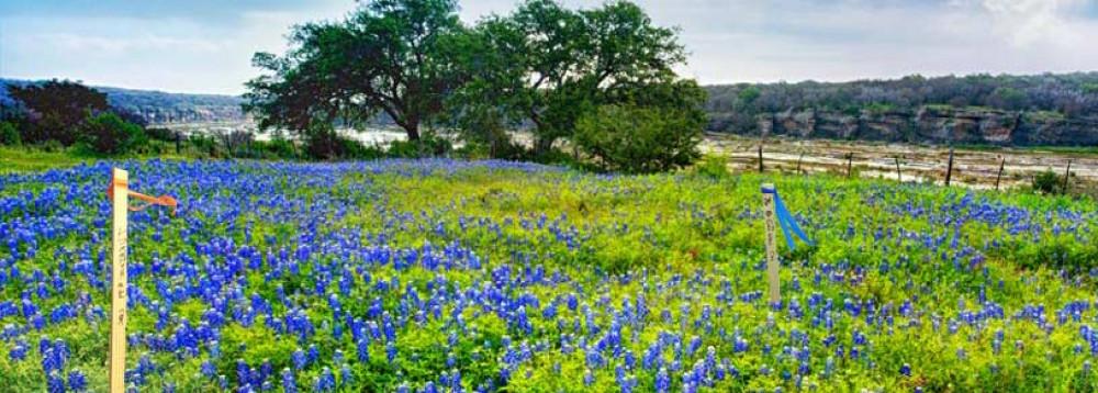 texas home themes watson survey austin tx